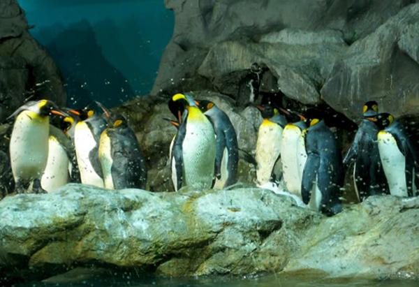 Побережье пингвинов