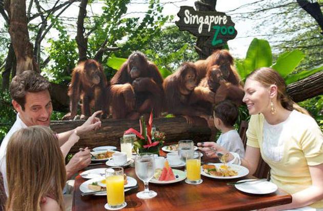 Завтрак в джунглях