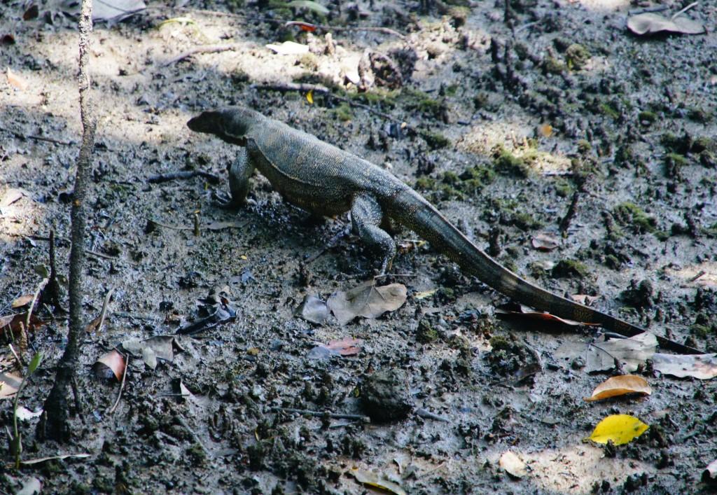 В заповеднике Сунгей-Булох обитает множество видов животных