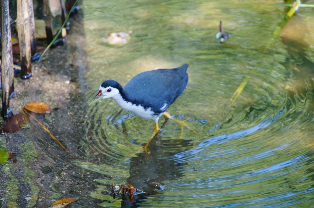 В заповеднике можно увидеть разные виды птиц